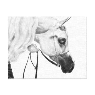 Horse Pencil Design Canvas Gallery Wrap Canvas