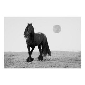 Horse perfect poster