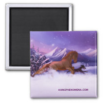 Horse Phenomena Winter Magnet
