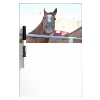 Horse Photo Dry Erase Board