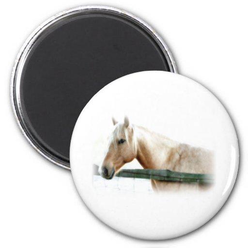 Horse Photo Fridge Magnets