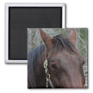 Horse photo magnet