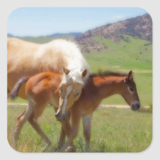 Horse Photo Mare and Foal  Home and Kitchen Decor Square Sticker