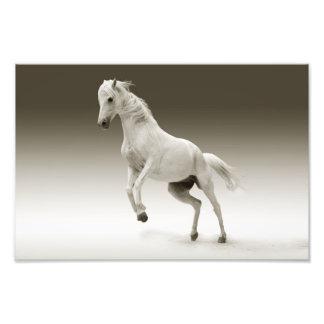 horse art photo