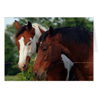 Horse Photograph Card