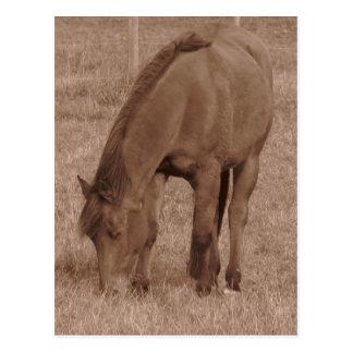 Horse Photograph in Sepia Postcard