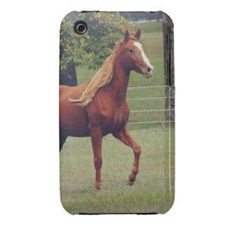 Horse Photograph iPhone 3 Case Mate Case