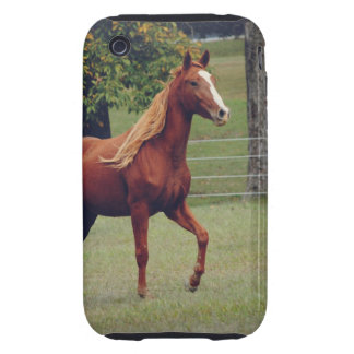 Horse Photograph iPhone 3 Case Mate Tough Case