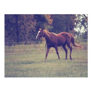 Horse Photograph l Post Card