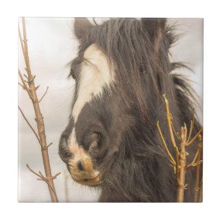 Horse photograph tile