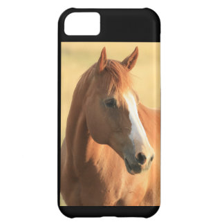 Horse picture cover for iPhone 5C