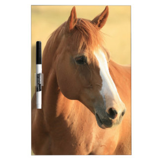 Horse picture dry erase board