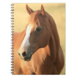 Horse picture notebooks