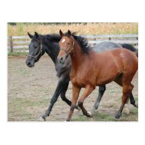 Horse Play Postcard