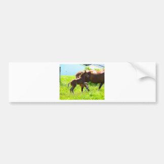 Horse Pony Baby Foal Cute Bumper Sticker