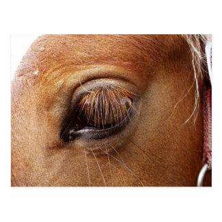 Horse / Pony Eye Close Up - Horse Photography Postcard