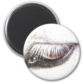 horse/pony eye fridge magnets