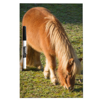 horse pony  in the farm dry erase whiteboards