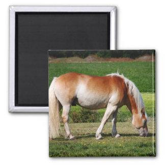 Horse portrait 2 inch square magnet