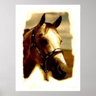 Horse Portrait Artwork Poster
