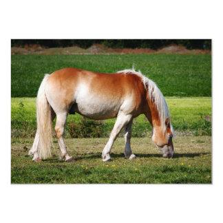 Horse portrait card