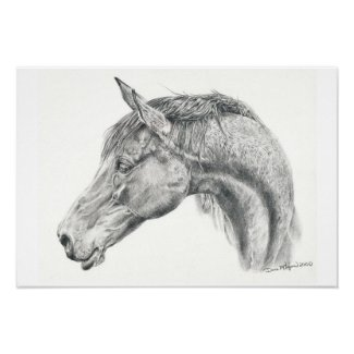 Horse portrait poster in graphite pencil drawing