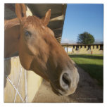 Horse portrait, Swaziland, South Africa Large Square Tile