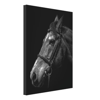 Horse Portrait - Wrapped Canvas