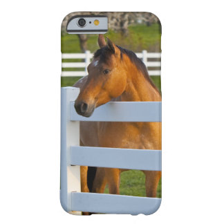 Horse poses by Flathead Cherry orchard near Barely There iPhone 6 Case