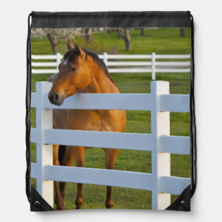 Horse poses by Flathead Cherry orchard near Drawstring Bag