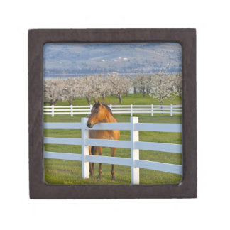 Horse poses by Flathead Cherry orchard near Jewelry Box
