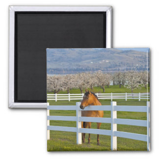 Horse poses by Flathead Cherry orchard near Magnet