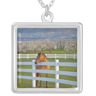 Horse poses by Flathead Cherry orchard near Necklace