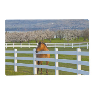 Horse poses by Flathead Cherry orchard near Placemat