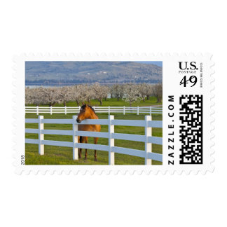 Horse poses by Flathead Cherry orchard near Postage