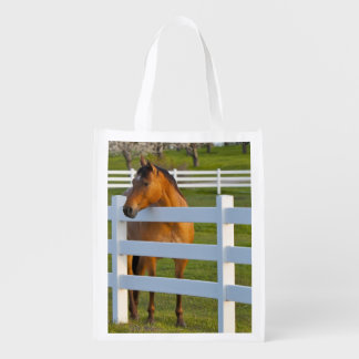 Horse poses by Flathead Cherry orchard near Reusable Grocery Bag