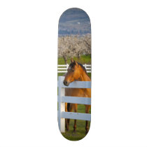 Horse poses by Flathead Cherry orchard near Skateboard