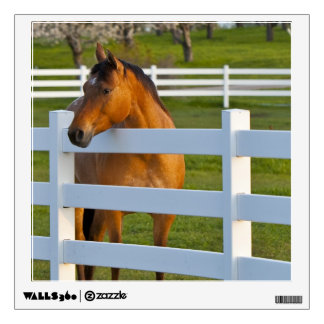 Horse Poses By Flathead Cherry Orchard Near Wall Decal Part 48