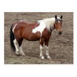 horse post card
