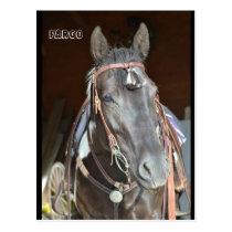horse Post card of name pinto mare Fargo