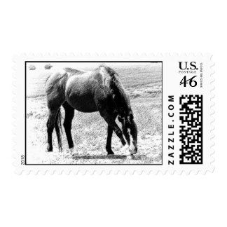 Horse Postage Stamp