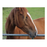 Horse postcard 1