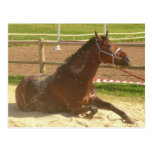 Horse postcard - heste postkort