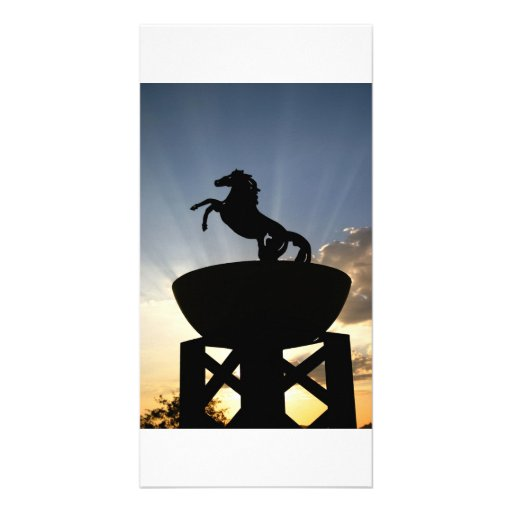 horse postcard photo card