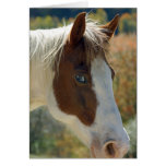 Horse Postcard Stationery Note Card