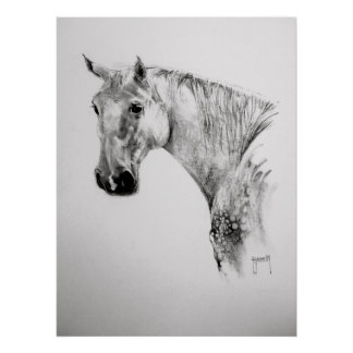 Horse Print/Poster Poster