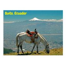 Horse, Quito, Ecuador Postcard