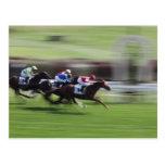 horse race post card