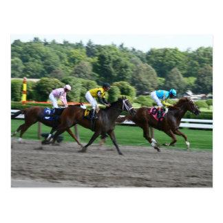horse races postcard