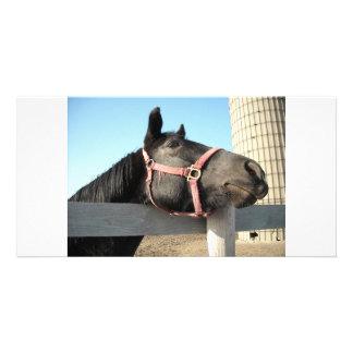Horse/Ranch/Barn Card
